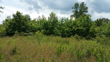 Goose Creek Estates Tract 25