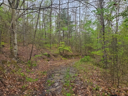Paint Rock Creek Tract 38