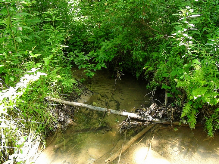 5 acres with small stream $208 per month