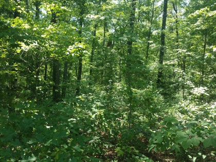 Clear Fork Acres Tract 8