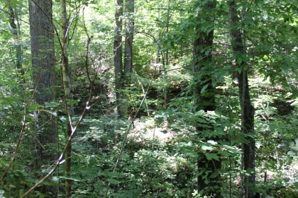 Goose Creek Estates Tract 34