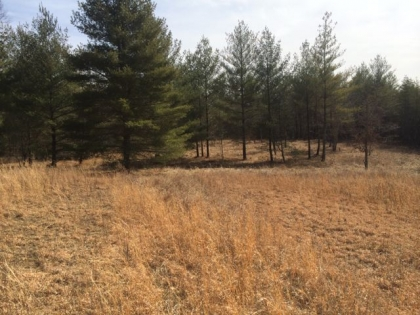 Burrville Rd Tract 2