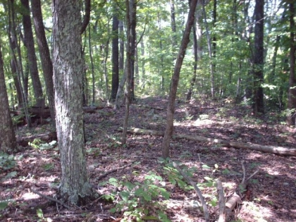 Bolinger Rd Tract 1A