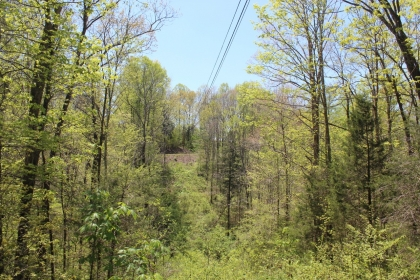 Poplar Cove Creek Tract 4