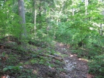 Bolinger Rd Tract 1B