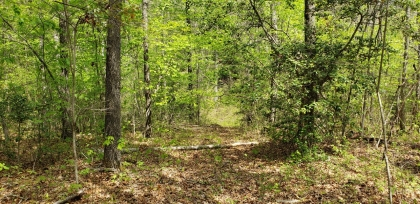Clear Fork Acres Tract 10
