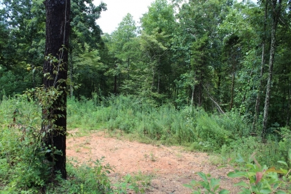 Sugar Hollow Tract 12