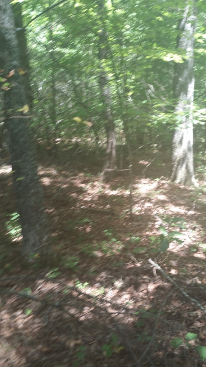 White Creek Acres Tract 16