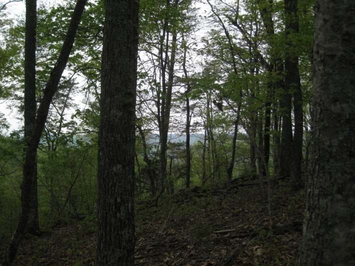 Hollow Ridge Trails Tract 1